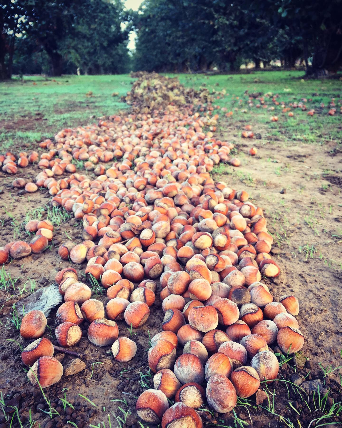 On The Nut Farm